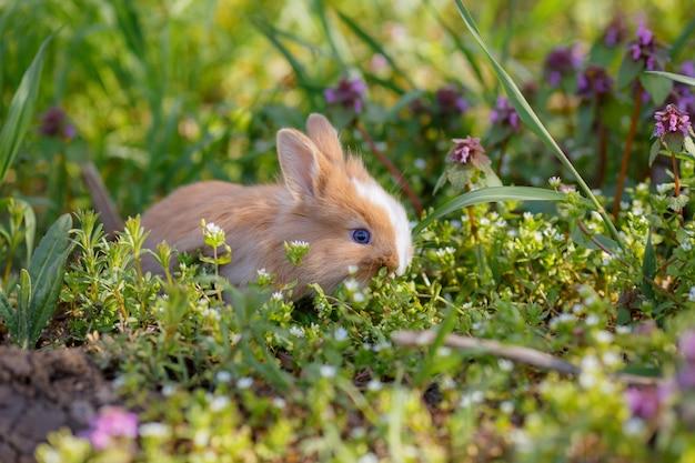 Маленький кролик сидит в траве