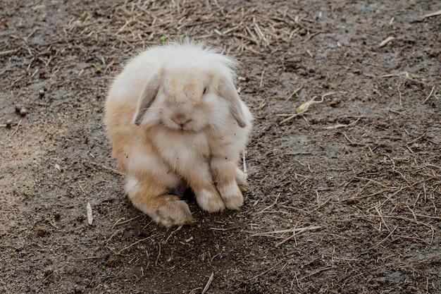 Little rabbit sitting on isolated soil ground.