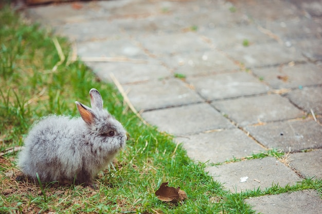 Маленький кролик.