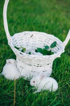 緑の芝生の上の白いバスケットに小さなウサギ。イースターのウサギ。小さな白いウサギ