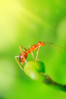 Little red ants on flower petals and green stems with blurred background in the morning
