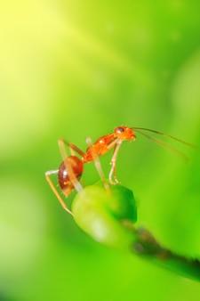 아침에 배경이 흐릿한 꽃잎과 녹색 줄기에 작은 빨간 개미