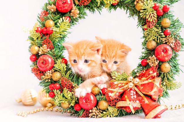 クリスマスリースの小さな赤い子猫