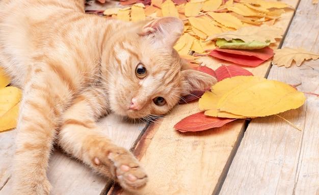 紅葉の横にある小さな赤い子猫