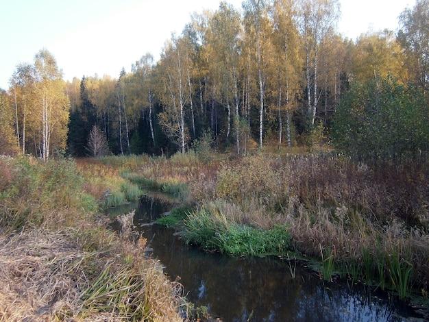 秋の森の小さな川