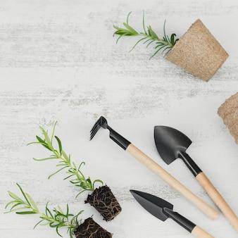 흰색 바탕에 정원 도구와 공예 냄비 옆에 검은 흙에 작은 로즈마리 묘목