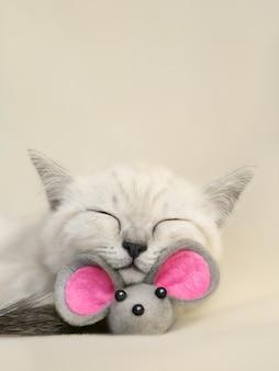 Маленький шотландский спящий милый biege кот с серой игрушечной мышкой на бежевом фоне мягкий фокус