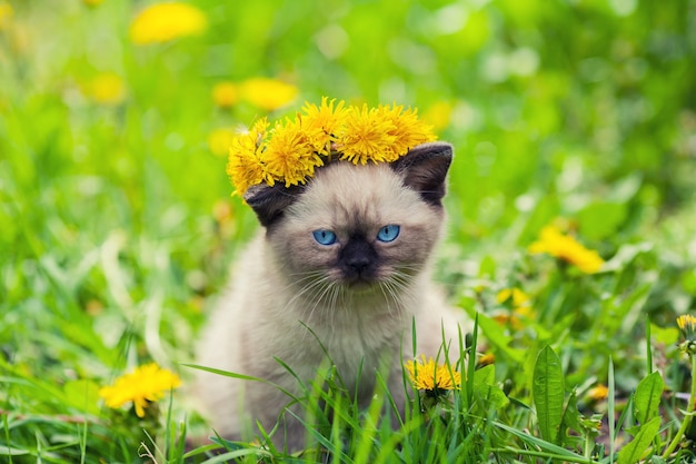 Маленький сиамский котенок в короне из одуванчиков
