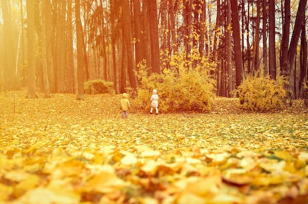 小さな兄弟の子供たちの女の子と男の子が秋の公園を歩き、環境の自然を研究します。世界を探検します。背面図と背面図。フレア