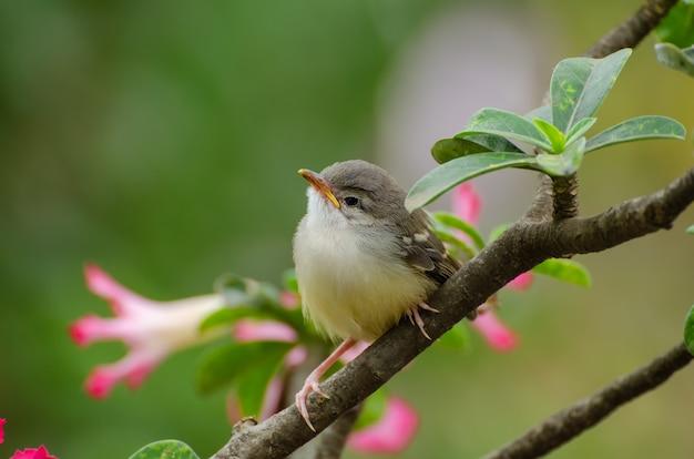 花にとまる小さな歌う鳥
