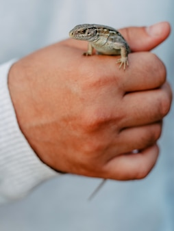 Little small lizard in the hand of man, fist, closeup