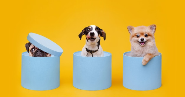 Маленькие улыбающиеся собаки, сидящие в синих подарочных коробках на желтом фоне.