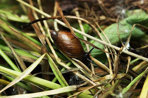 마른 가지에 크롤 링 하는 작은 달팽이. 가을 가지가 말라 있고 달팽이는 여전히 생계를 위해 고군분투하고 있습니다. 말린 식물에 작은 달팽이 껍질.