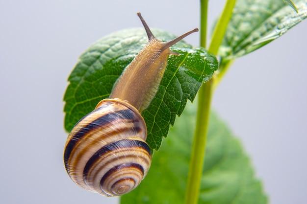 작은 달팽이 꽃에 크롤 링. 연체 동물과 무척추 동물. 진미 고기와 맛있는 음식.