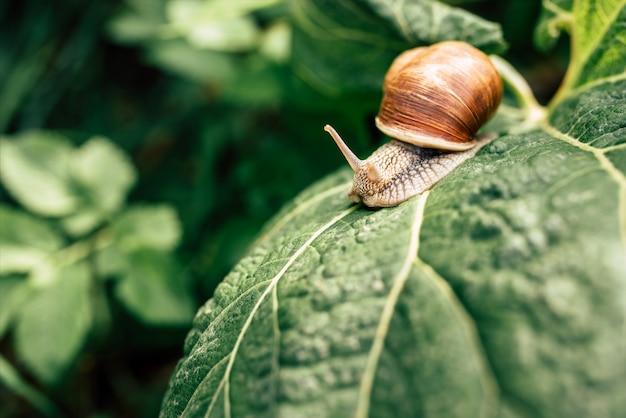 Little snail in the grass
