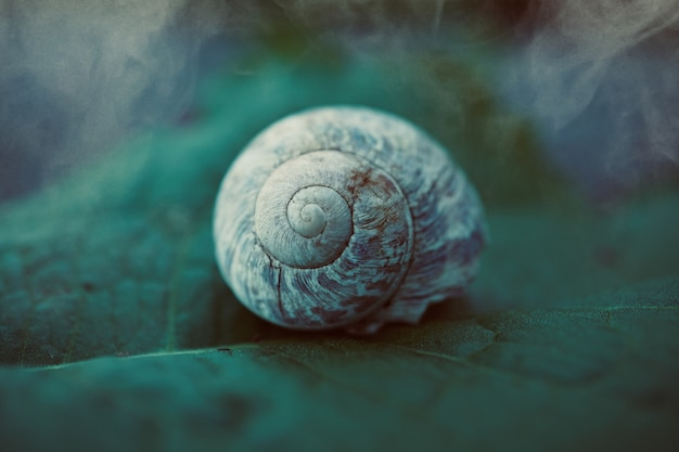 Little snail in the nature