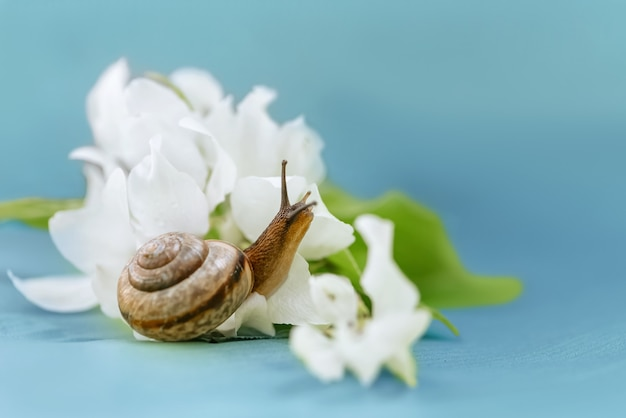 Little snail and white apple flowers. spring time and flowering period concept