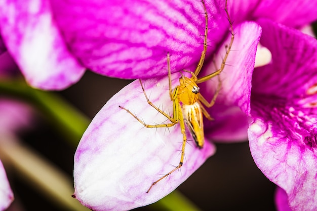 A little spider on the purple orchid.