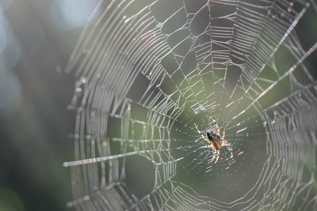 Little spider on the web.