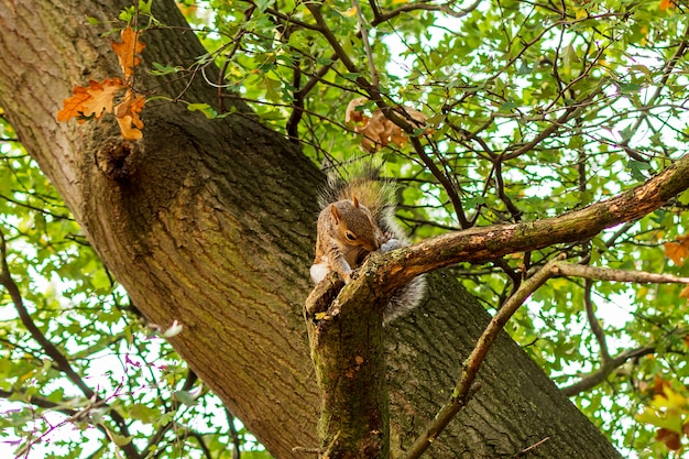 Little squirrel eating on the branch of a tree