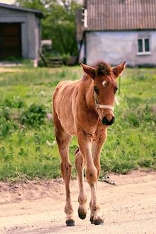 Little stallion swings near the stables