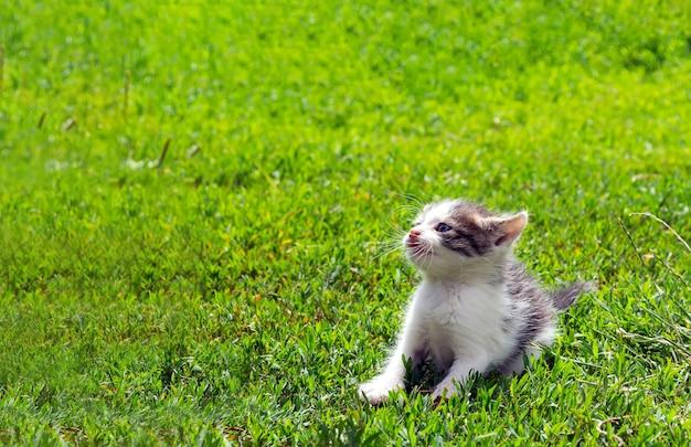 芝生で遊ぶ野良猫