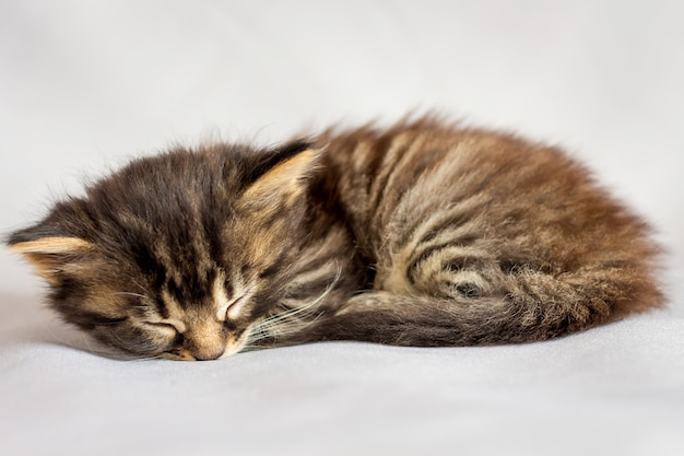 A little striped kitten is tired and sleeping