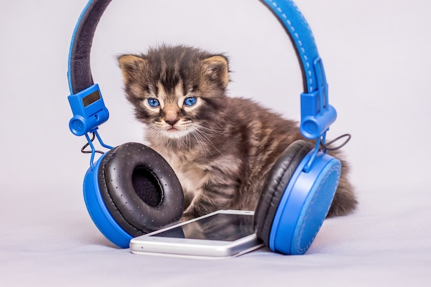 A little striped kitten near the headphones and mobile phone. babies are mastered by modern gadgets_