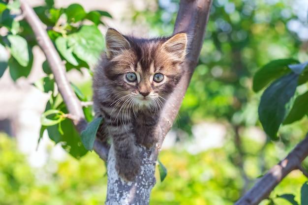 Little striped kitten on a tree on a pretty summer day_