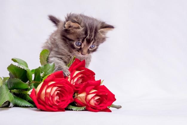 バラの花束を持つ小さな縞模様の子猫。休日の挨拶のための花。誕生日のバラ_