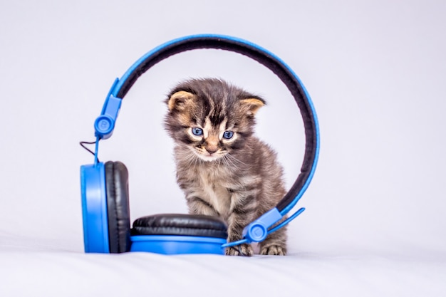 A little striped kitty sits by the headphones. listen to your favorite music_