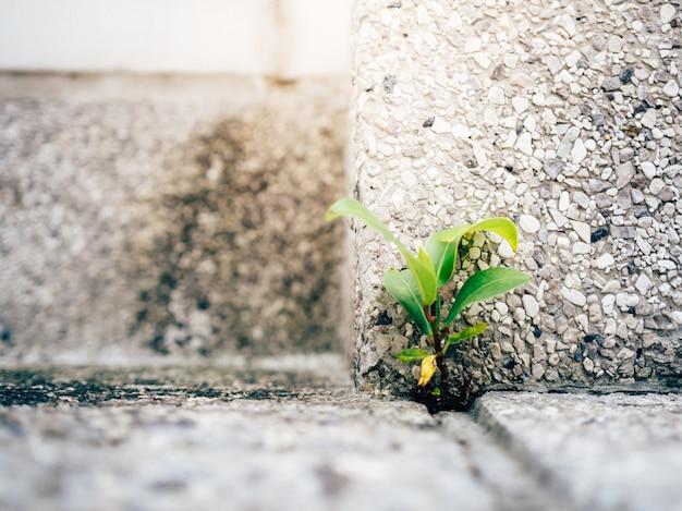 콘크리트 바닥 모서리에서 자라는 작은 강한 새싹.