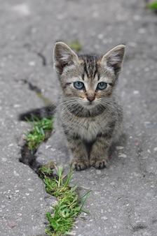 小さなぶち猫が路上に亀裂のある道路でアスファルトに座っています