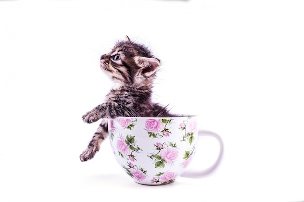 Little tabby kitten in a big white cup