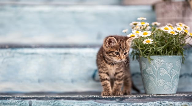 A little tabby kitten hiding behind a bucket full of flowers on staircase.