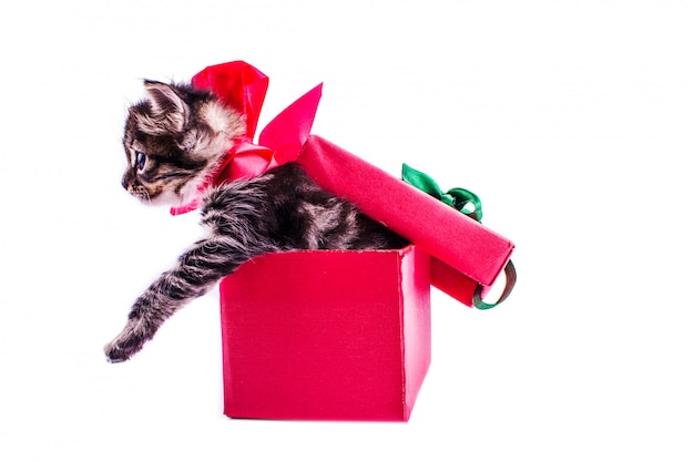 Little tabby kitten in a red gift box with a bow
