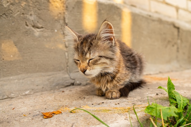 Little tabby kitten sitting on the street, pet playing in the yard.