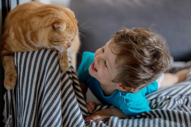 小さな幼児の男の子が家でスコティッシュフォールド猫と遊ぶ
