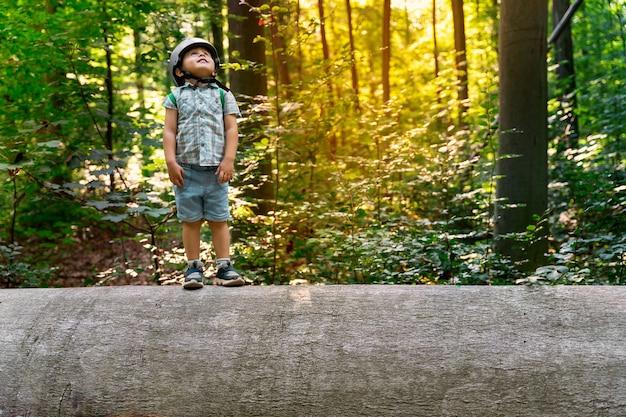 ベルギーの森の大きな大きなニレの幹に立っている小さな幼児。自然を探索する安全ヘルメットをかぶった子供。公園に沈む夕日。