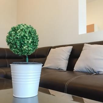 Il piccolo albero di dracaena braunii nel piatto di ceramica bianco