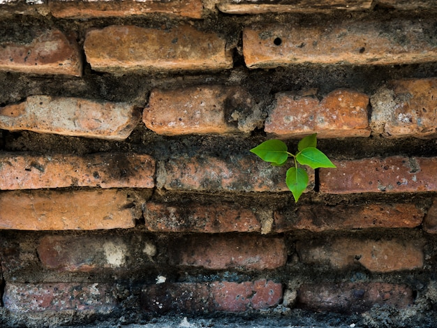 Little tree growing on old brick wall