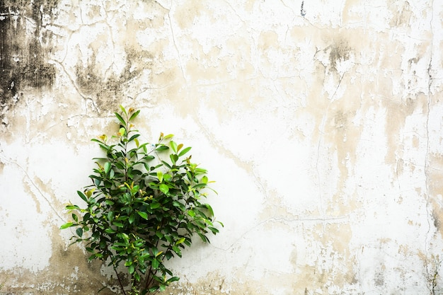 Little tree is growing through at old concrete wall