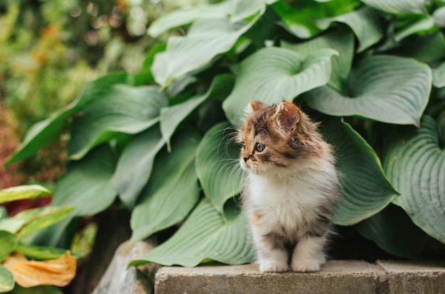 Little tricolor kitten  sits in the garden