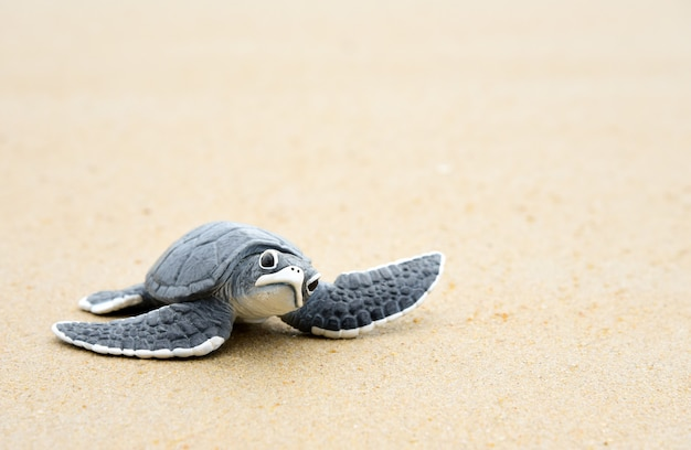 하얀 해변에 작은 거북이