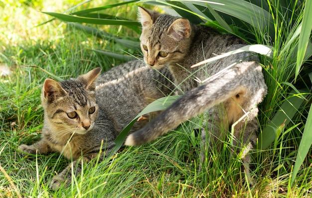 草で遊ぶ小さな2匹の子猫