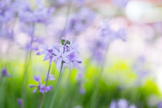 Little violet flowers on a field