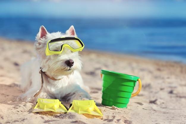 Little west highland terrier wearing diving equipment