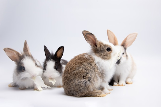 Маленький белый и черный кролик ест капусту на изолированном фоне белой или старой розы в студии. его маленькие млекопитающие в семье Premium Фотографии