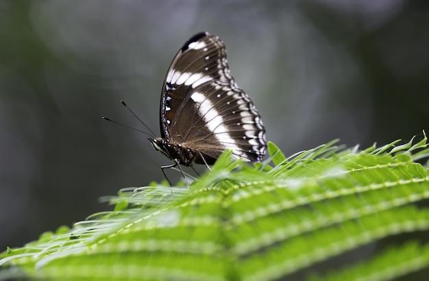 Маленькая бело-коричневая бабочка отдыхает на листе