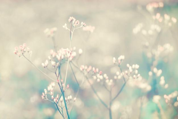 小さな白とピンクの草の花ソフトフォーカス春の背景